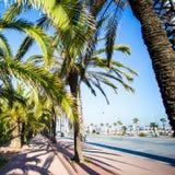 Palmiers et promenade à Barcelone Photo stock