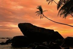Palmiers et roches silhouettés au coucher du soleil, Unawatuna, Sri Lanka Photo libre de droits