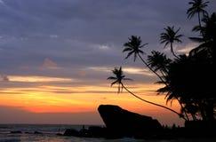 Palmiers et roches silhouettés au coucher du soleil, Unawatuna, Sri Lanka Image libre de droits