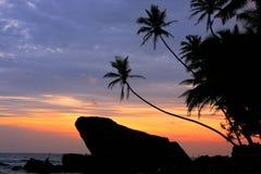 Palmiers et roches silhouettés au coucher du soleil, Unawatuna, Sri Lanka Photos libres de droits