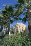 Palmiers et roseaux Images libres de droits