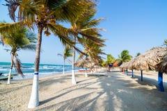 Palmiers et sable image libre de droits