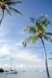 Palmiers et Sailbots Photos libres de droits