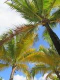 Palmiers et un fond de ciel et blanc bleu de nuage Photo stock
