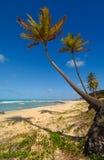 Palmiers et une belle plage photographie stock libre de droits