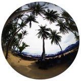 Palmiers exotiques sur la côte de la ville Images stock