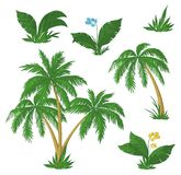 Palmiers, fleurs et herbe Photos libres de droits
