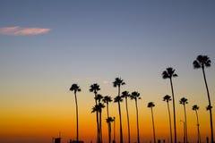Palmiers grands contre le ciel de coucher du soleil Photo stock