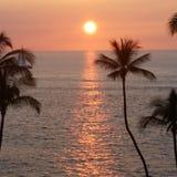 Palmiers hawaïens du coucher du soleil W d'océan Photo libre de droits