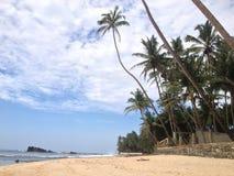 Palmiers ivres Image libre de droits