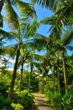 Palmiers, jardins par la baie, Singapour Images libres de droits