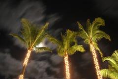 Palmiers la nuit Image libre de droits