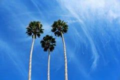 Palmiers, le symbole de la ville de côte de la Californie Photographie stock