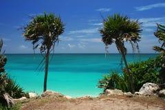 Palmiers par Ocean Photographie stock