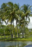 Palmiers par un lac Photo libre de droits