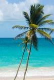 Palmiers par une belle mer de turquoise Photos stock