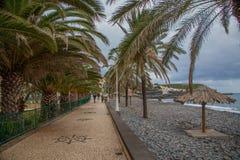 Palmiers, plage et océan sur l'île de la Madère, Portugal Photo stock