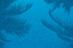 Palmiers reflétés dans la piscine bleue Photo stock