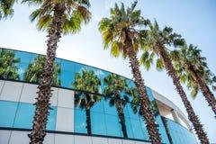 Palmiers reflétés dans les fenêtres du bâtiment Photographie stock