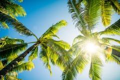 Palmiers s'étendant dans le ciel Images libres de droits