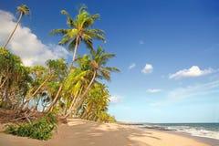 Palmiers se levant au ciel Photos libres de droits