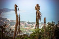 Palmiers secs sur un fond de mer et de ciel dedans Photos stock