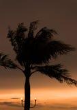 Palmiers silhouettés contre le ciel bleu Photos libres de droits