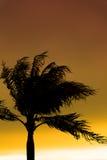 Palmiers silhouettés contre le ciel bleu Images stock