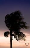 Palmiers silhouettés contre le ciel bleu Photographie stock libre de droits