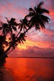 Palmiers silhouettés sur une plage au coucher du soleil, île d'Ofu, Tonga Images stock