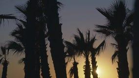 Palmiers soufflant contre le vent à l'arrière-plan de ciel de coucher du soleil banque de vidéos