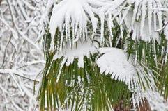 Palmiers sous la chute de neige importante Photographie stock libre de droits