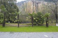 Palmiers sous les falaises en parc géologique national de Changxing, Zhejiang photographie stock libre de droits