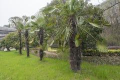 Palmiers sous les falaises en parc géologique national de Changxing, Zhejiang images libres de droits