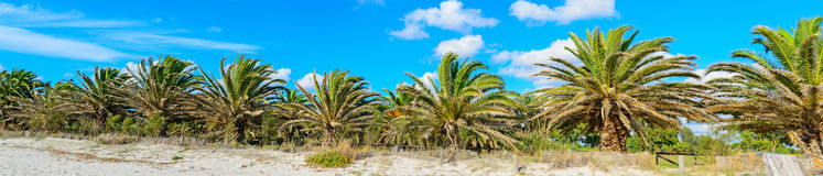 Palmiers sous un ciel bleu Photographie stock libre de droits