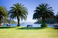 Palmiers sur bord de mer de ville Photographie stock