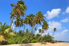 Palmiers sur la plage, Image stock