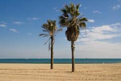 Palmiers sur la plage Image libre de droits