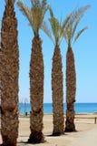 Palmiers sur la plage photographie stock libre de droits