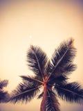 Palmiers sur la plage Photos libres de droits