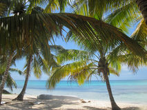 Palmiers sur la plage Photos stock