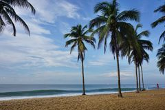 Palmiers sur la plage au Togo photo libre de droits