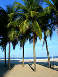 Palmiers sur la plage de Copacabana Image stock