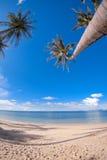Palmiers sur la plage de sable Photographie stock