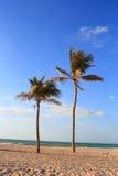 Palmiers sur la plage du Charjah Photos libres de droits