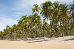 Palmiers sur la plage, horizontal de vacances Photo stock