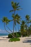 Palmiers sur la plage tropicale Image libre de droits