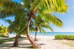 Palmiers sur la plage tropicale Photographie stock libre de droits