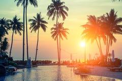 Palmiers sur la plage tropicale pendant le coucher du soleil étonnant nature photos stock