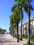 Palmiers sur la rue Photos libres de droits